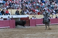 Imagens da corrida de alternativa do cavaleiro Tomás Pinto