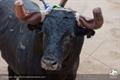 Fotos da corrida do 10º Aniversário do site Naturales