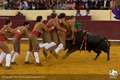 Fotos da corrida de toiros Nova Gente - Campo pequeno