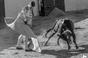 As imagens da aula prática do certame internacional do cabo da Lezíria - dia 11