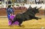 As imagens de Alcácer do Sal - Integrada na Feria PIMEL '16