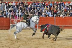 João Moura Jr. - Triunfo e lesão em Espanha