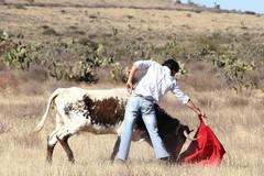 Paco Velásquez tenta a campo aberto na Ganadaria Espírito Santo