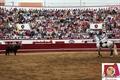 Imagens do Concurso de Ganadarias das Sanjoaninas 2011