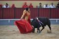 Imagens da 2ª novilhada da XXI Semana da Cultura Tauromáquica