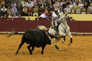 Cavalo de Moura Jr. faleceu nas Sanjoaninas