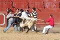 Imagens do treino dos Forcados Amadores de Arronches em Barbacena