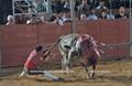 Imagens da 2ª Corrida da Feira Taurina de Samora Correia