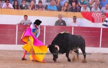 Toiro de Falé Filipe vence concurso de ganadarias em Alter do chão