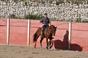 Imagens do 1º treino do cavaleiro Paulo Jorge Santos
