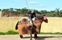 Pedrito, Gomes e Alcalde tenta na ganadaria Verela Crujo Herds.