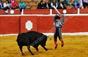 Imagens do triunfo de Manuel Dias Gomes em las Virtudes
