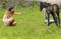 XXV Festival Internacional do Cavalo Lusitano dias 20, 21, 22 e 23 de Junho