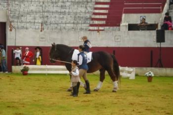 O Cavalo, a Criança e Nós, os Adultos