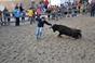 Imagens dos Festejos Populares Taurinos em Alcochete
