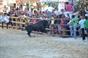 Imagens da Tauromaquia Popular no Monitjo