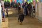 Imagens da Tauromaquia popular em Pegões