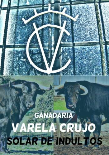 VARELA CRUJO NO Campo PEQUENO TV