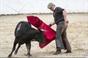 Alunos da Escola de Toureio Manuel Falcão tenta na ganadaria de ganadaria de António Silva