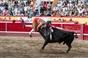 Concurso de Ganadarias - Sanjoaninas 2019